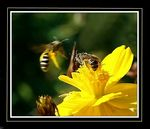 Title: Two Bees or Not Two BeesOlympus E-10