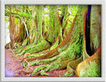 Title: Middle Earth Trees