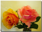 Title: Two Roses