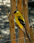 Title: My Favorite Goldfinch