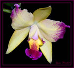 Title: Peruvian Orchid