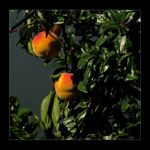 Title: Two Hot PeachesCanon PowerShot S5 IS