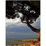 Title: The Old Tree And The SeaCanon PowerShot S5 IS