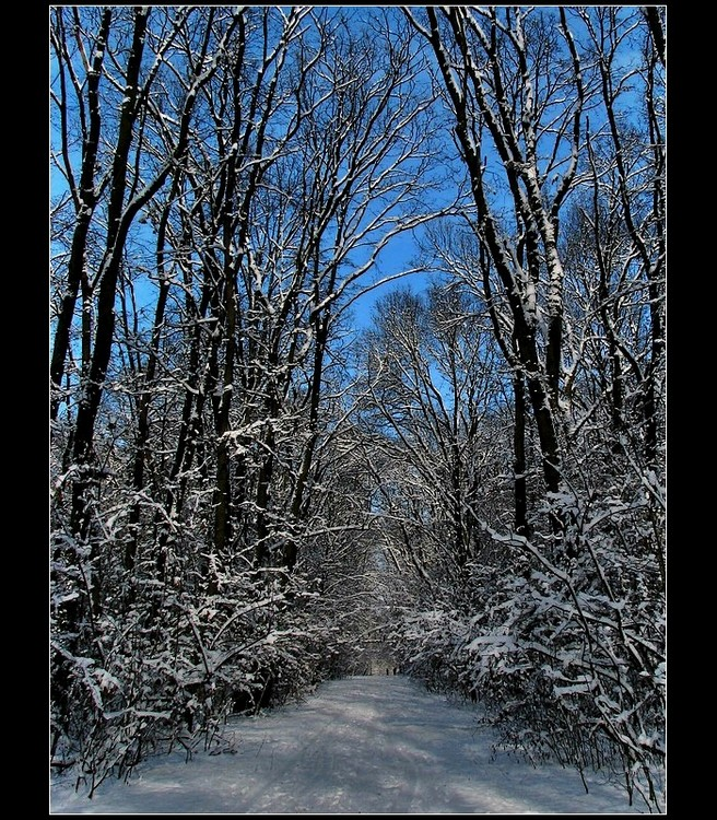 The Forest In Winter Colours