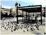 Title: Pigeons of Athens