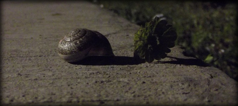 Trap for Snail