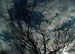 Title: Clouds and Branches