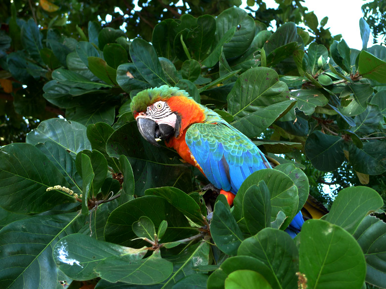 macaw with a nut