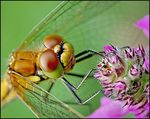Title: Smile of a dragonfly