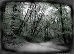 Title: Mystic forest