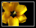 Title: Yellow flower