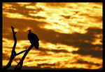 Title: Vulture and SunsetCanon EOS 500D