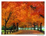 Title: Autumn in the Park