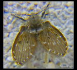 Title: :.:Awful Fly:.:Nikon Coolpix 8700