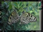 Title: The Mating Paper Kites