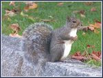 Title: A squirrelMinolta Dimage Z1