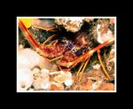 Title: LangousteOlympus C-7070 Wide Zoom