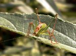 Title: Punctuated grasshopperOlympus C-7070 Wide Zoom