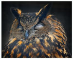 Title: Nocturnal OwlNikon D80 Digital SLR