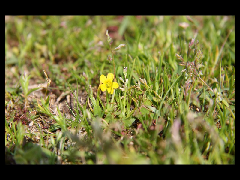 Yellow in the grass