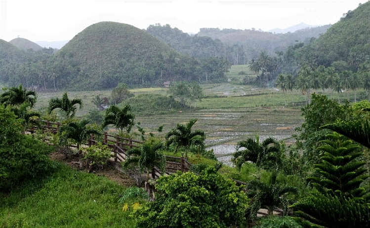Palm,Ricefield and Mountain