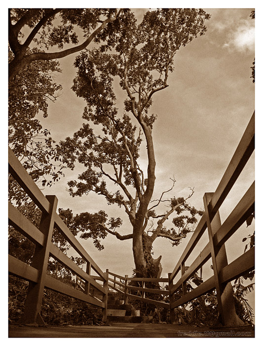 My Perspective in Sepia :)