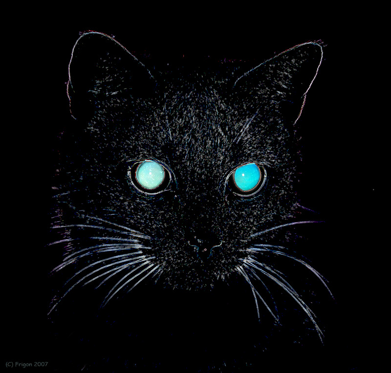 Cat From Hell IV