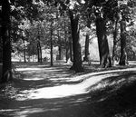 Title: Mount-Royal ParkMinolta X-370