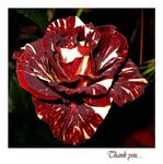 Title: Thank you....Canon PowerShot A530