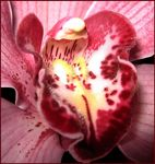 Title: The Kiss of the DevilCanon PowerShot A530