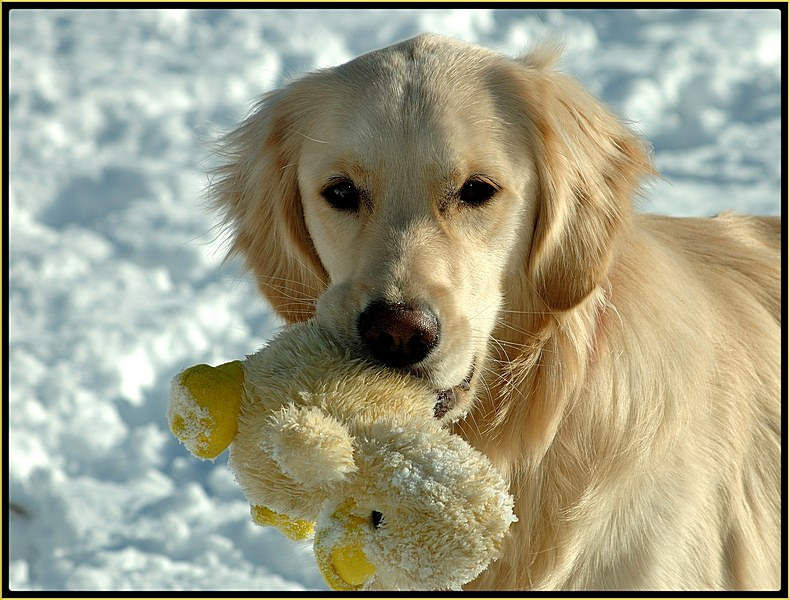 Duck Retriever