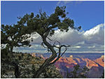 Title: Grand Canyon (II)