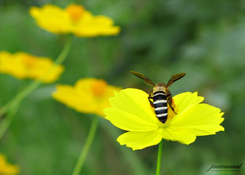 The Flower Bee