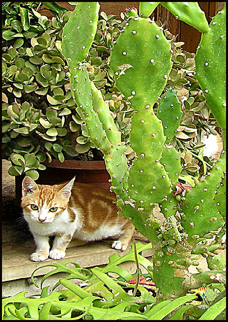 the cactus and the cat