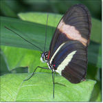 Title: Close up ButterflyKodak Easyshare P850