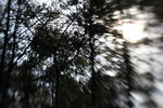 Title: Love Nature - LensbabyCanon EOS Rebel XS