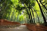 Title: Bamboo ForestCanon 5D Mark ll